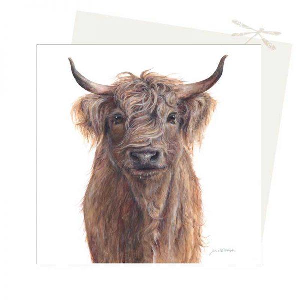Scottish cow Card