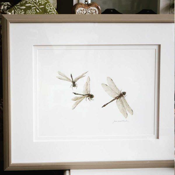 Dragonfly original framed art