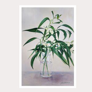 Acacia spray