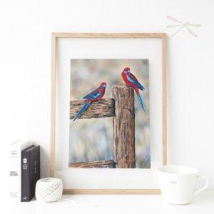 crimson rosella print framed