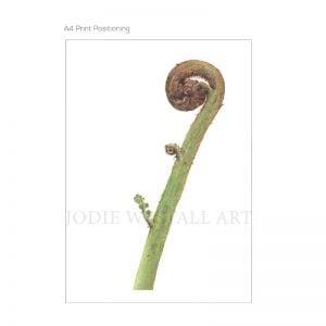 Life unfolding -fern frond